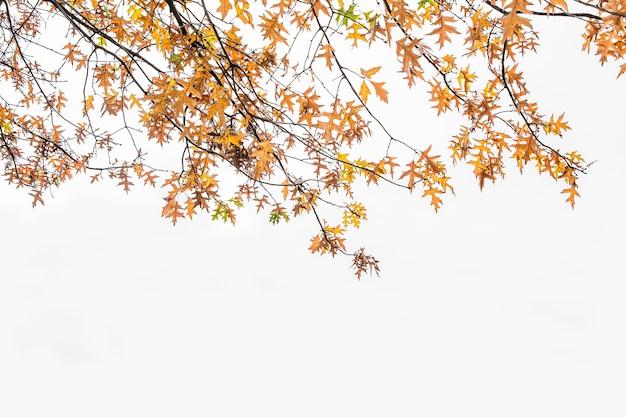 Folhas de outono em tons de marrom, amarelo e verde