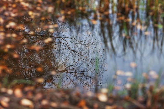 Folhas de outono em uma poça de água. reflexo do céu de outono e das árvores em uma poça da floresta entre as folhas.