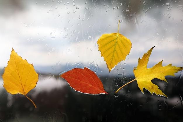 Folhas de outono em vidro molhado em tempo chuvoso