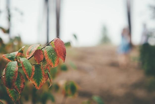 Folhas de outono focadas com casal de noivos turva no fundo