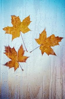 Folhas de outono foco seletivo. flora e fauna.
