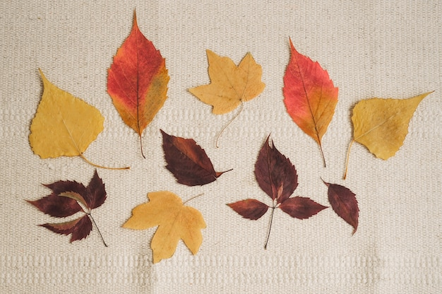 Folhas de outono. fundo sazonal bonito.