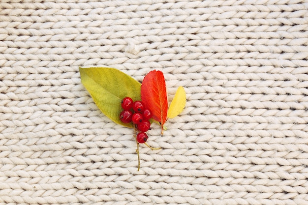 Folhas de outono groselhas na malha