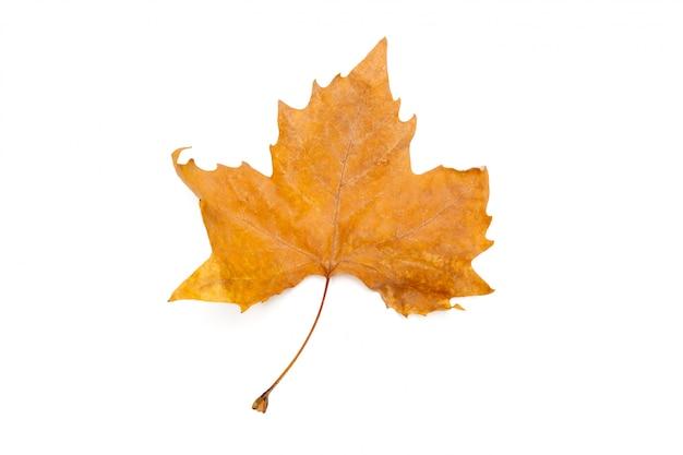 Folhas de outono isolado no branco
