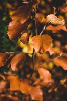 Folhas de outono laranja amarelo