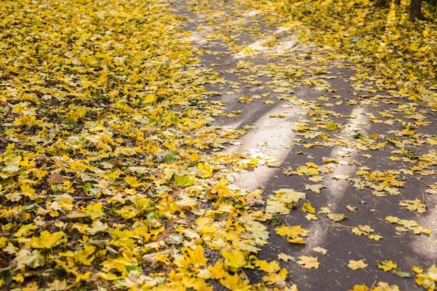 Folhas de outono laranja e amarelas no asfalto