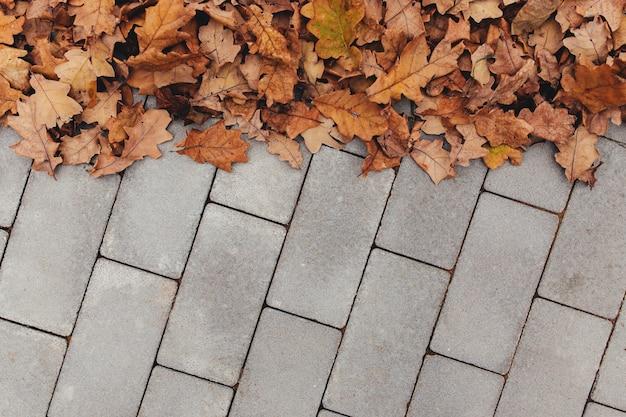 Folhas de outono na calçada cinza.