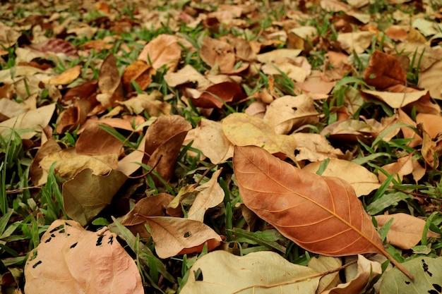 Folhas de outono na grama verde durante a temporada mudando para o fundo