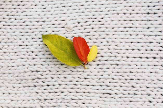 Folhas de outono na malha