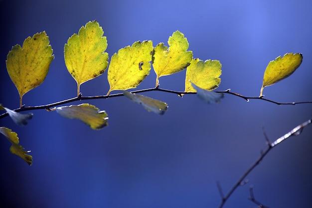 Folhas de outono na superfície desfocada