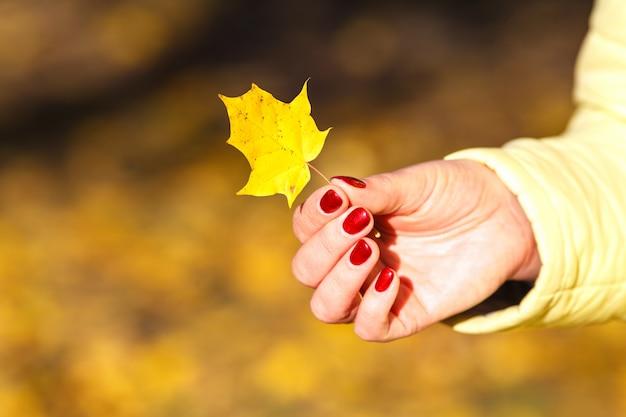 Folhas de outono nas mãos da menina