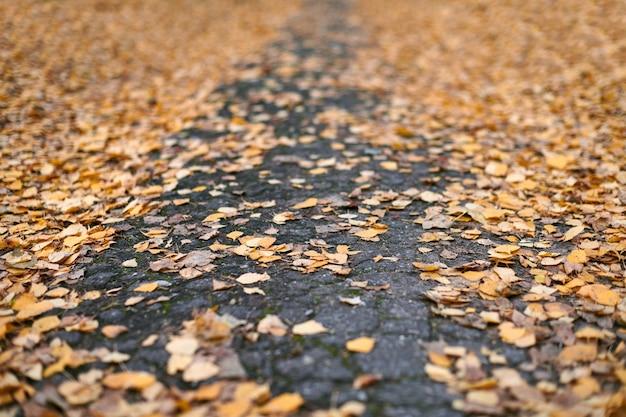 Folhas de outono no caminho do parque da cidade. folhagem caída colorida. projeto padrão de fundo para uso sazonal.