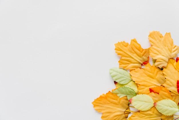 Folhas de outono no fundo branco