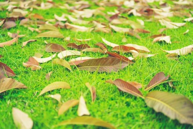 Folhas de outono no gramado da grama verde