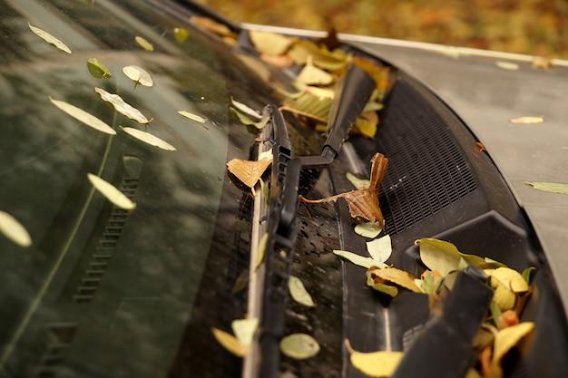 Folhas de outono no pára-brisa de um carro