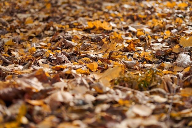 Folhas de outono no parque da cidade. folhagem caída colorida. projeto padrão de fundo para uso sazonal.