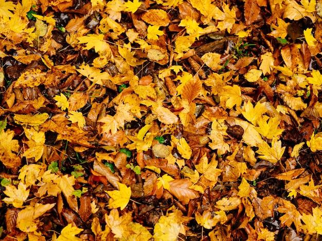 Folhas de outono no solo, vista superior da floresta