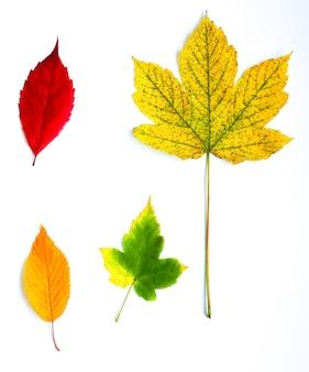 Folhas de outono reais deitado em fileiras sobre fundo de madeira. foto sazonal. cores amarelas e verdes com textura. cartão postal de novembro.