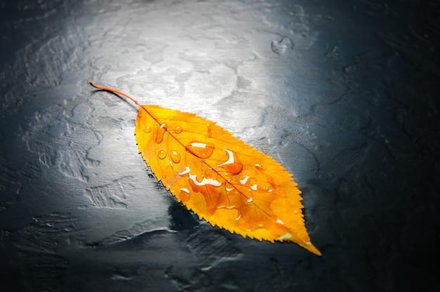 Folhas de outono reais deitado na chuva cai sobre fundo preto. foto sazonal. cores amarelas e verdes com textura. cartão postal de novembro.