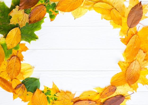 Folhas de outono reais em um círculo sobre fundo branco de madeira. foto sazonal. cores amarelas e verdes com textura. copie o lugar do espaço. cartão postal de novembro.