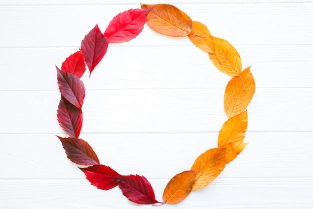 Folhas de outono reais em um círculo sobre fundo branco. foto sazonal. cores amarelas e verdes com textura. copie o lugar do espaço. cartão postal de novembro.