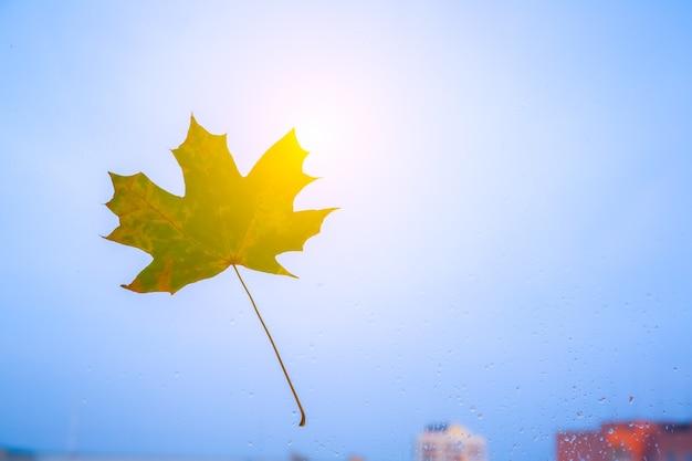 Folhas de outono reais na janela. foto sazonal. cores amarelas e verdes com textura. cartão postal de novembro. fundo transparente. vista bonita.