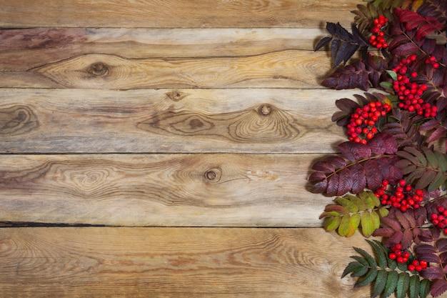 Folhas de outono rowan e bagas vermelhas em fundo de madeira