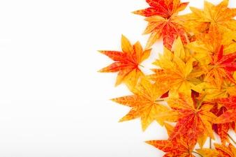 Folhas de outono secas em um fundo branco