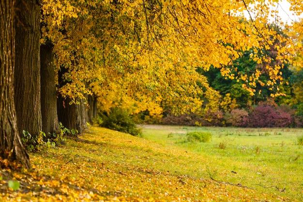 Folhas de outono sob uma grande árvore no outono
