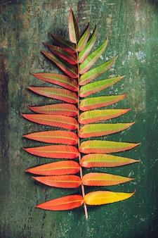Folhas de outono sobre backgound de madeira velha, plana leigos