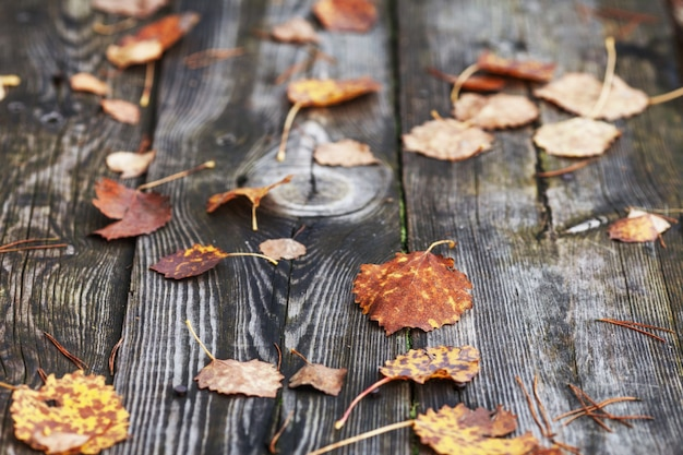 Folhas de outono sobre fundo de madeira velho. folha caída na madeira no lago. tempo do final do outono.
