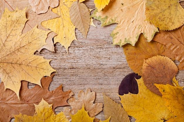 Folhas de outono sobre fundo de madeira
