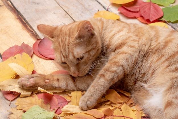 Folhas de outono sobre madeira. com copyspace