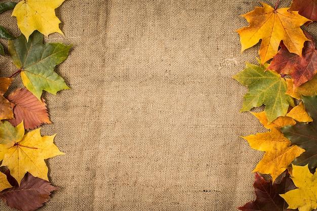 Folhas de outono sobre serapilheira