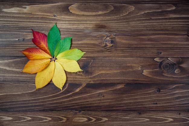 Folhas de outono transição de verde para vermelho em fundo de madeira