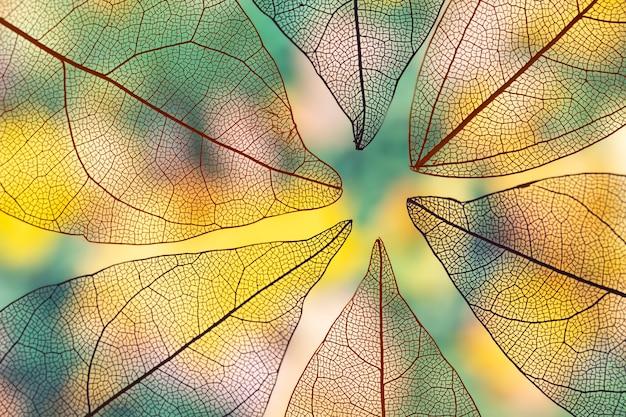 Folhas de outono transparentes vivas