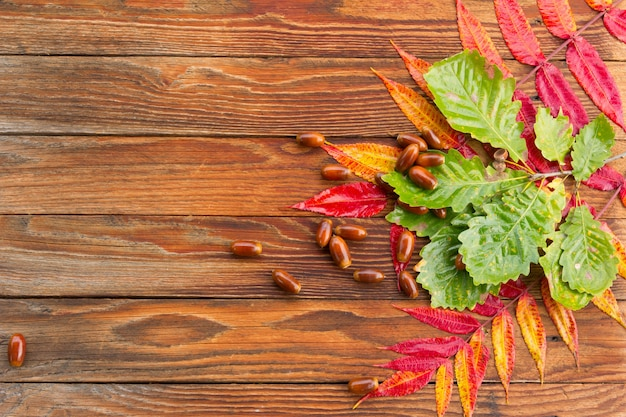 Folhas de outono vermelhas, amarelas e verdes brilhantes e bolotas de carvalho