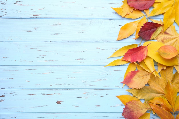 Folhas de outono vermelhas e laranja em uma mesa azul