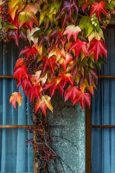 Folhas de outono vermelhas na janela