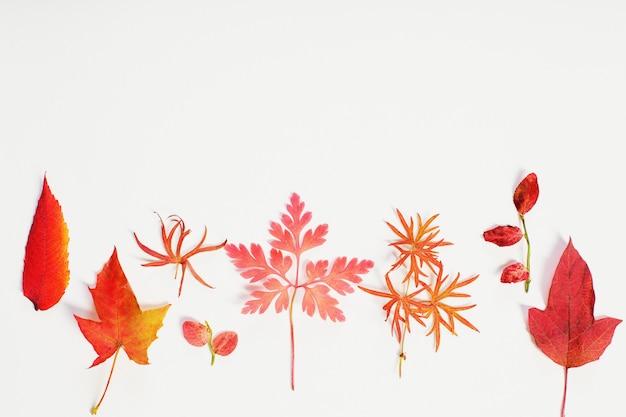 Folhas de outono vermelhas sobre fundo branco