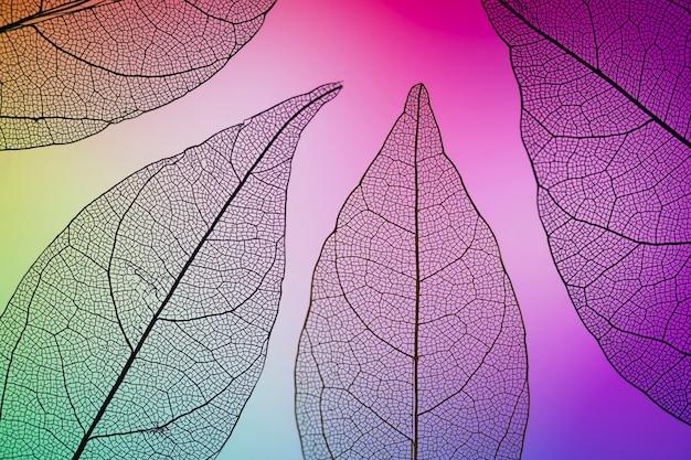 Folhas de outono vibrantes coloridas roxas