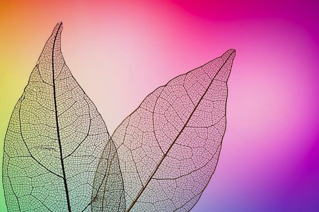Folhas de outono vibrantes roxas