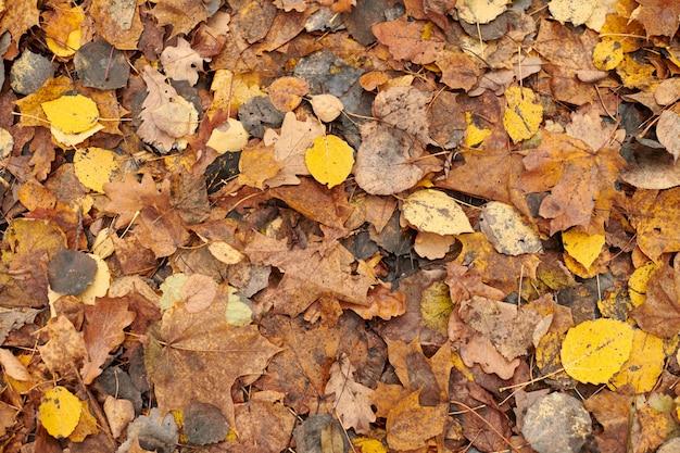 Folhas de outono, vista superior