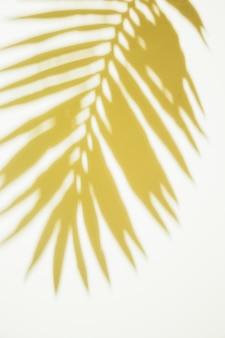 Folhas de palmeira amarela sobre fundo branco