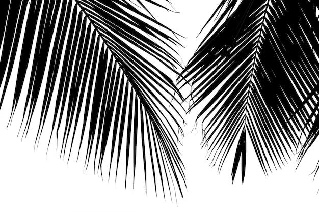 Folhas de palmeira closeup - monocromática