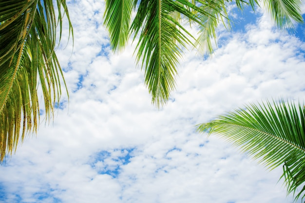Folhas de palmeira com fundo do céu.