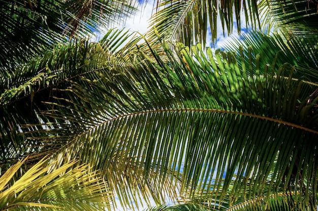 Folhas de palmeira com fundo