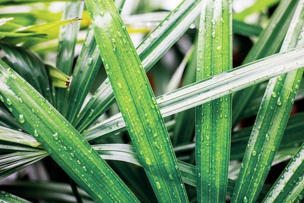 Folhas de palmeira com o nascer do sol.