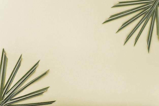 Folhas de palmeira com pontas afiadas
