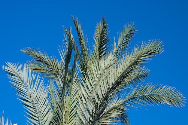 Folhas de palmeira contra o céu azul